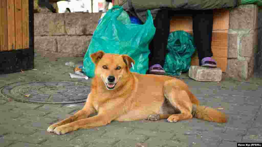 Уличный пес отдыхает в тени