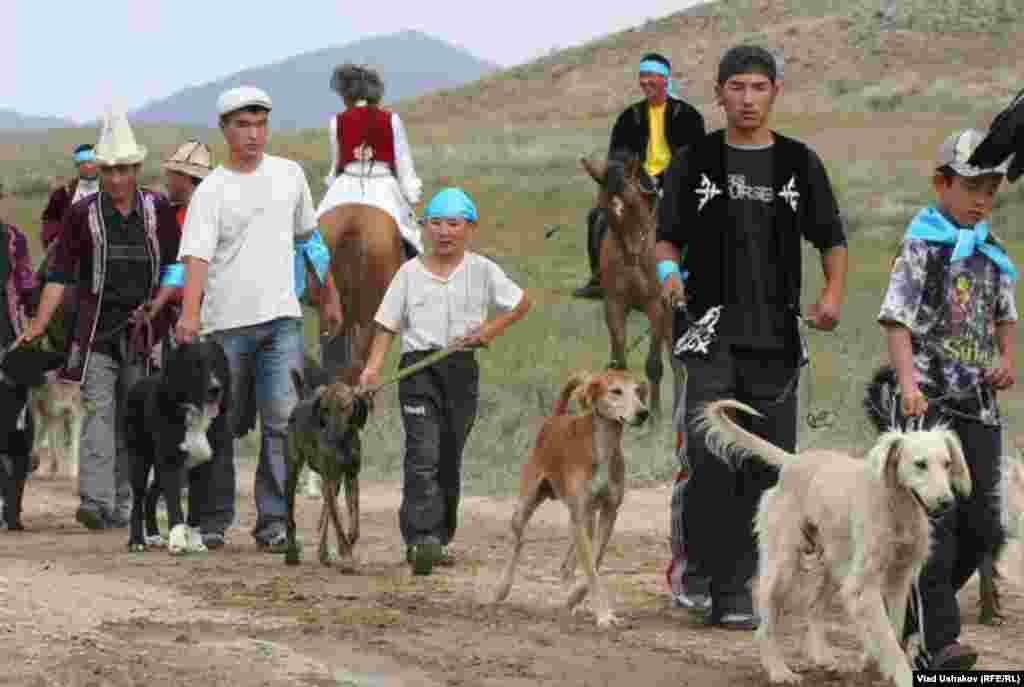 Тайган был выведен для охоты на больших высотах, глубокая грудь позволяет легким отлично функционировать в горах.