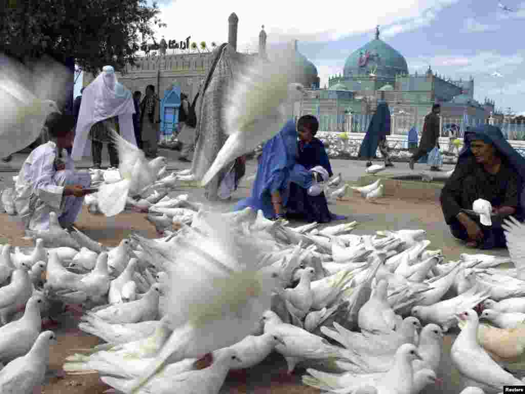 Afghan women feed pigeons in front of the Imam Ali Shrine in the city of Mazar-e Sharif on May 9. Photo by Reuters