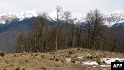Во время подготовки к Олимпиаде в Сочи были срублены деревья в Сочинском национальном парке, 23 апреля 2009 года