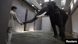 Слон Кошик. Южная Корея, 2 ноября 2012 года.