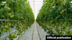 Armenia - A greenhouse belonging to the Spayka company, November 13, 2018.