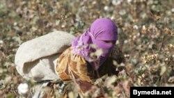 Айрим сурхонликлар¸ фермерлар очилган пахтани ўғрилардан қўриқлаш учун сафарбар қилинганини айтади.