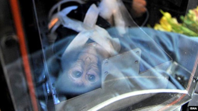 Tehran's previous attempt to send a monkey into space in 2011 was reported to have failed. (file photo)