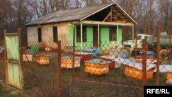 Угасающих сельских дворов в Абхазии немало. Конечно, проблема эта глобальная. Но в Абхазии село – это еще и оплот абхазского язык, в городах овладеть им обычно труднее