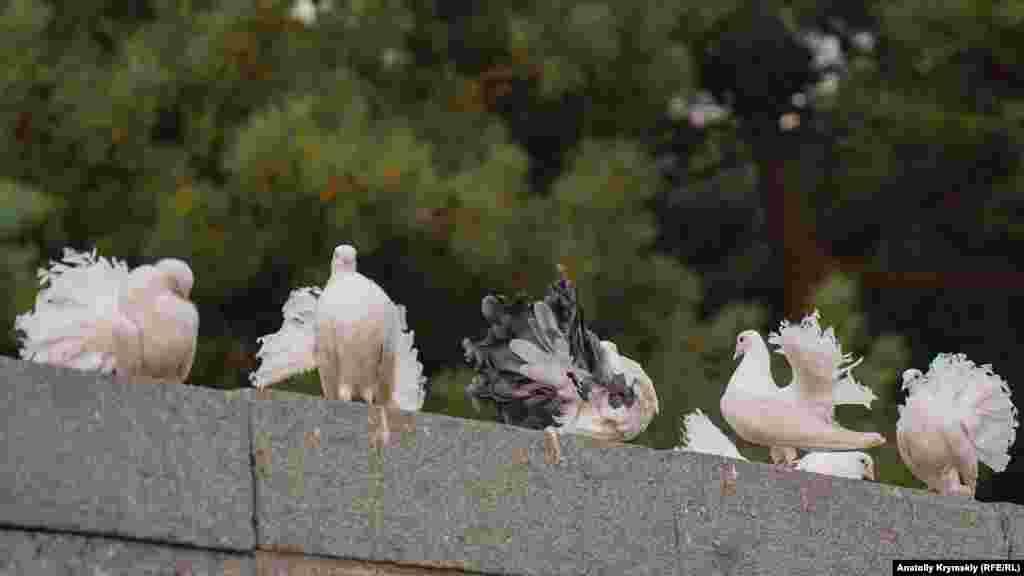 С породистыми голубями предлагали сфотографироваться за деньги
