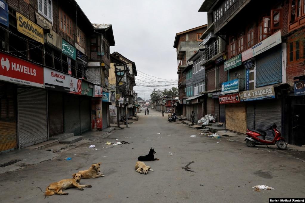 Дремлющие собаки на улице в Сринагаре. 11 августа 2019 года. Эта дорога была прежде очень оживленной.