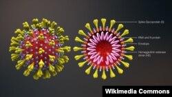 Компьютерная модель коронавируса