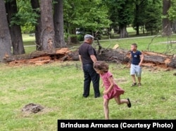 Un copac bătrân s-a prăbușit în Parcul Regina Maria, fost Coronini, din Timișoara