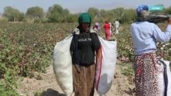 Почему женщины в Таджикистане не могут найти работу