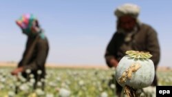 Afghanistan produces 90 percent of the world's opium, according to the United Nations.