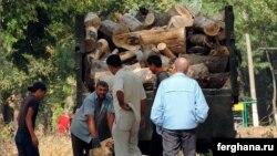 Вырубка деревьев в Чиланзарском районе. Фото «Фергана».