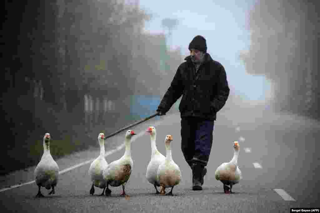 A man shepherds geese in the village of Krevo, some 100 kilometers northwest from Minsk. (AFP/Sergei Gapon)