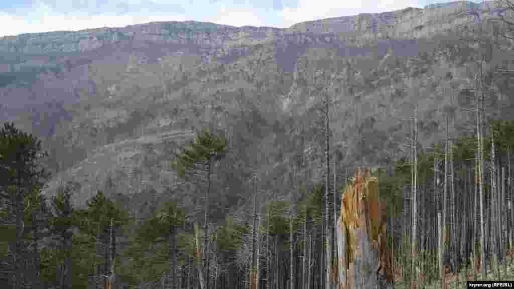 Вигляд із західного схилу на гору Лопата. Вогонь пройшовся і нею