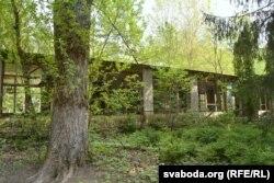 Будынкі імкліва зарастаюць лесам