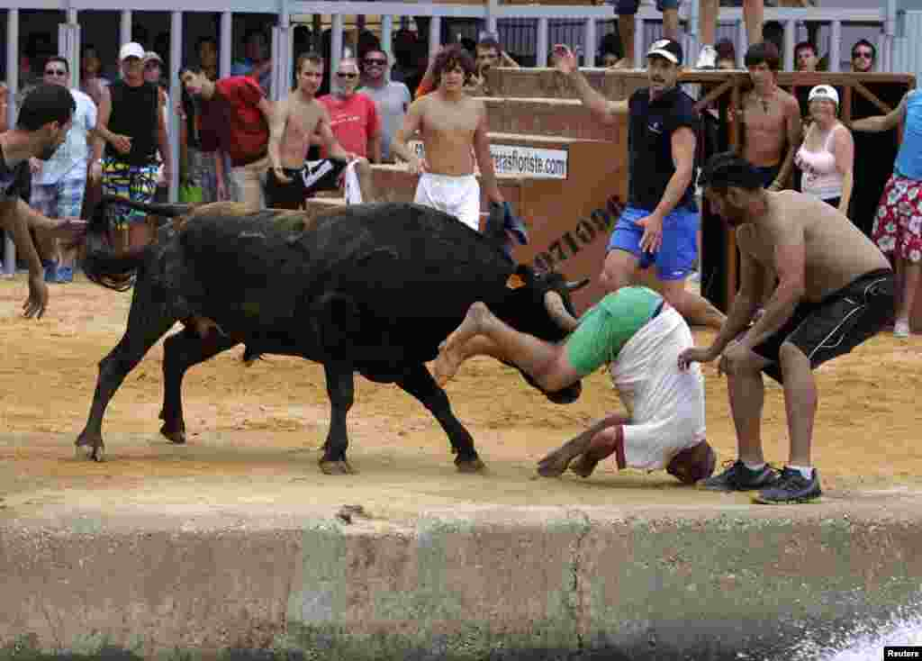 A reveller gets gored by a bull during the Bous a la Mar festival in the eastern Spanish coastal town of Denia. (Reuters/Heino Kalis)