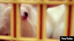 """Этому кролику суждено превратиться в жаркое. Кадр из фильма Алины Кнеепкенс """"О еде"""""""