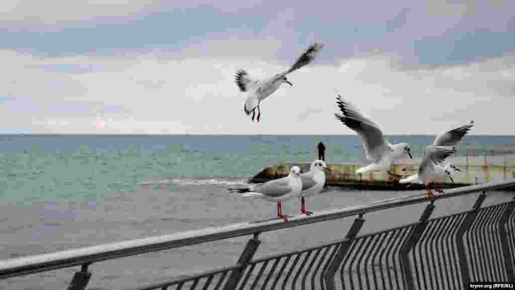 Чайки на пляже «Солнечный»