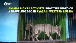 'Medieval' -- Activists Slam Russian Zoo