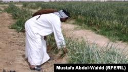 Намунаи либоси мардонаи арабӣ