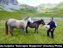 Sinjajevina se smatra drugim najvećim pašnjakom u Evropi