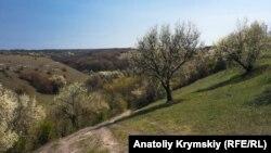 Все в цвету и цветах: прогулка вокруг Змеиной пещеры в Крыму (фотогалерея)