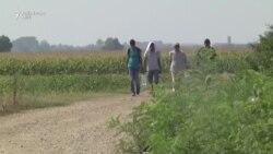"""Migrantët e """"ngujuar"""" në kufirin Serbi-Kroaci"""