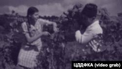 Крим, 1930-і роки, кримські татари збирають урожай
