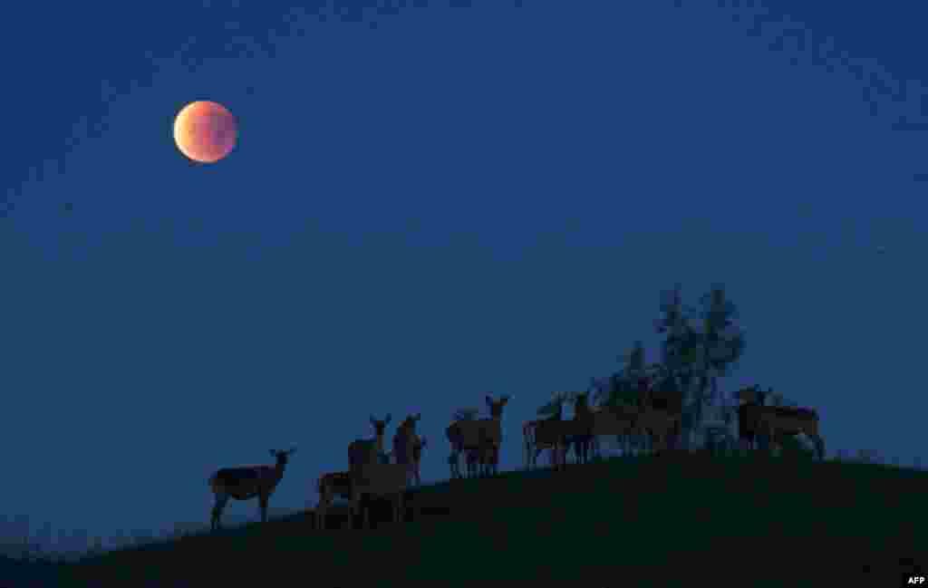 """""""Кровавая луна"""" в небе у белорусской деревни Явтеришки к северу от Минска."""