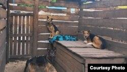 """Собаки в вольере приюта """"Алькин дом"""""""