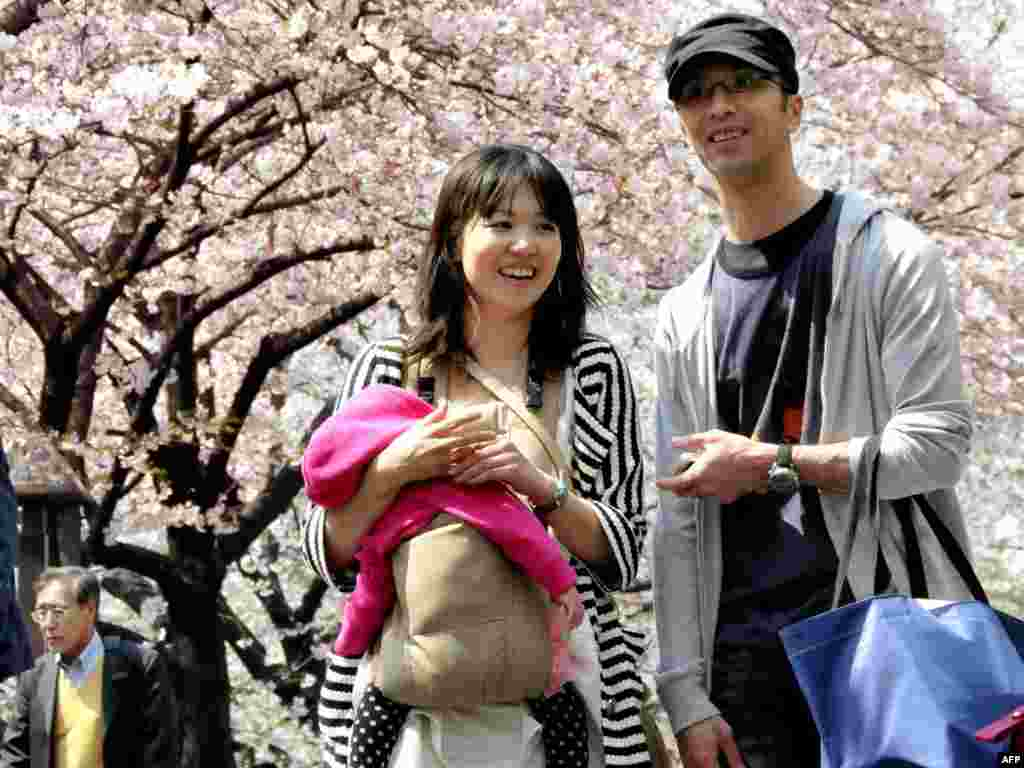 Японская сям'я пад вішнямі ў квецені ў Токіё. Штогод, паводле традыцыі, мільёны японцаў ходзяць любавацца, як цьвітуць вішні.