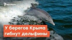 У берегов Крыма гибнут дельфины | Дневное ток-шоу