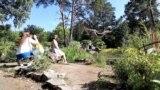 бонсай-сад в Новосибирске