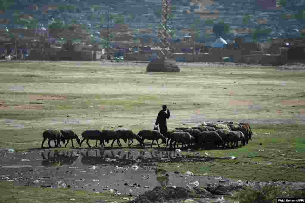 A shepherd herds his flock at Shuhada Lake in Kabul, Afghanistan. (AFP/Wakil Kohsar)