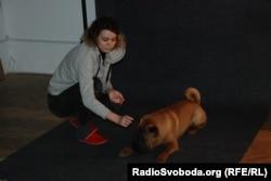 У каждого хозяина свой подход договориться с собакой