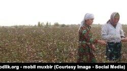 Узбекские женщины на хлопковом поле.