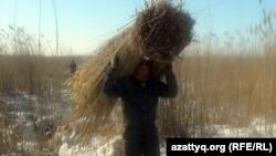 Житель села Белкопа Актюбинской области идет с вязанкой камыша, 19 февраля 2012 года.