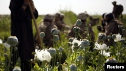 U.S. Marines talk to villagers during a patrol of poppy fields in Helmand Province.
