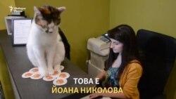 Момичето, което помага на бездомни котки
