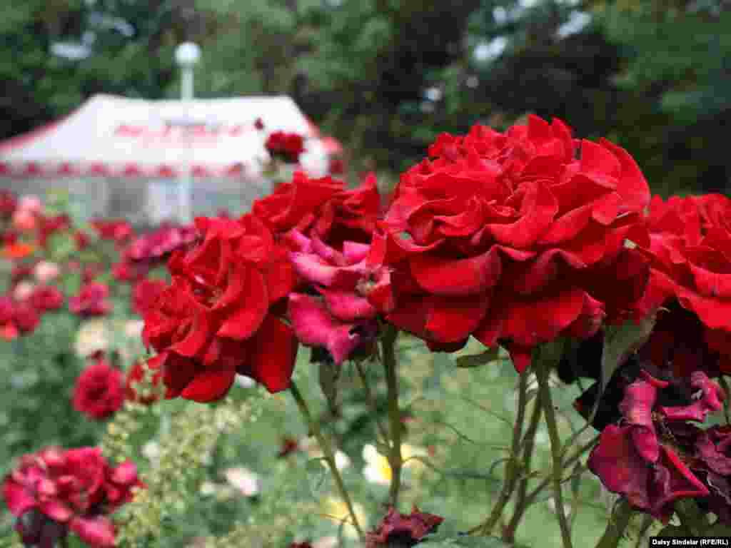 Roses grow in abundance in Osh, where even the most modest yards and roadside patches are packed full with the fragrant flowers.