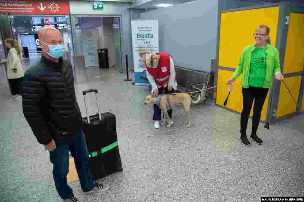 Пристигнувајќи од Рига, Јуха Турку (Л), беше прв патник кој е тестиран за коронавирус од страна на Сузана Паавилаинен (Д) и нејзиното куче додека четири кучиња кои душкаат од коронавирус ја започнуваат својата работа на аеродромот во близина на Хелсинки, Финска, 23 септември 2020 година.