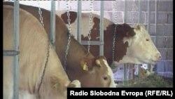 Bosnia and Herzegovina - Sarajevo, TV Liberty Show No.736, 30Aug2010