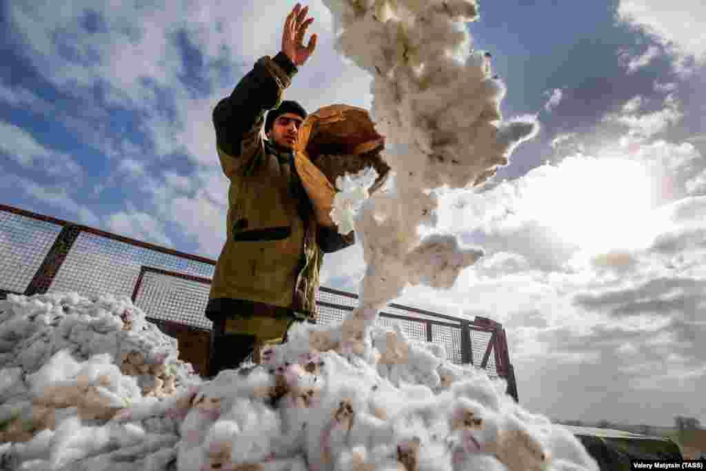 Cotton harvesting in Stavropol Krai, Russia. (TASS)