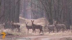 Три тисячі оленів, кабанів і зубрів – резиденцію Залісся відкрили для відвідувачів