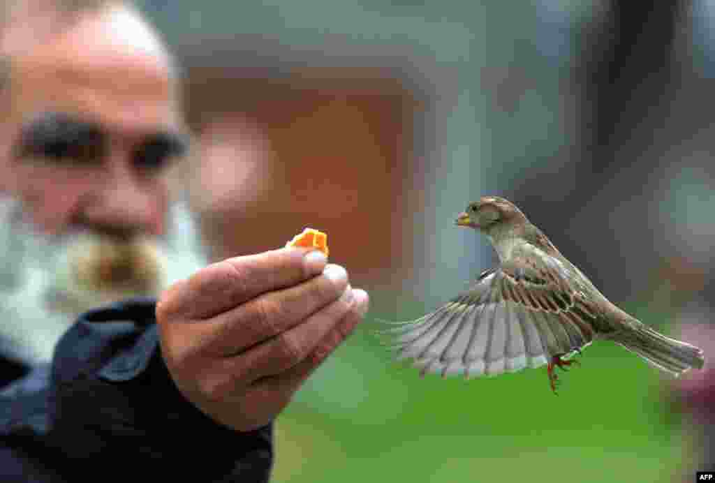 A man feeds a sparrow in the garden of the Museo del Prado in Madrid. (AFP/Dominique Faget)