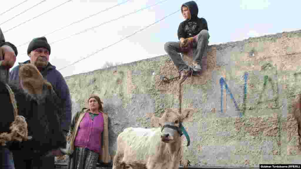 Мальчик на рынке сказал, что если они продадут белого теленка, то купят на вырученные деньги новую обувь и уголь на зиму.