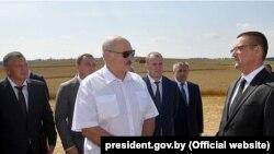 Аляксандр Лукашэнка кантралюе хаду ўборкі ўраджаю ў Менскім раёне, 1 жніўня