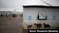 Угандадаги қочқинлар лагери.