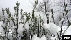 استان مازندارن روز سیزده بدر سفیدپوش شد