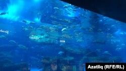 Сәүдә үзәгендә хәтта акулалар да яши